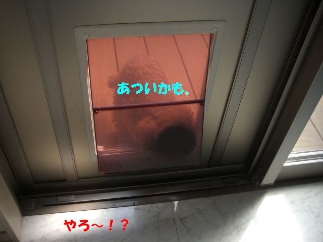 a0088086_1538668.jpg