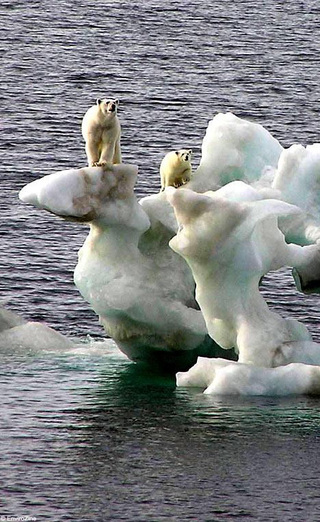 シロクマさんを救え!エコエコアザラク・・・_a0037910_8442586.jpg