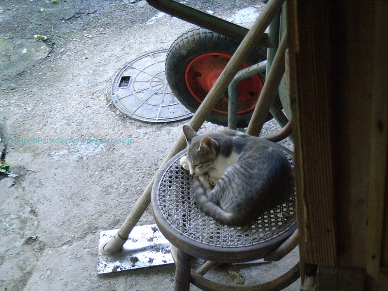 猫と生きる_e0132518_22504522.jpg
