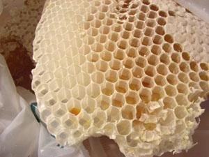 蜂蜜とり_b0038919_11355476.jpg
