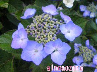 f0013519_10584913.jpg