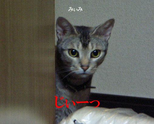 d0081025_2011293.jpg
