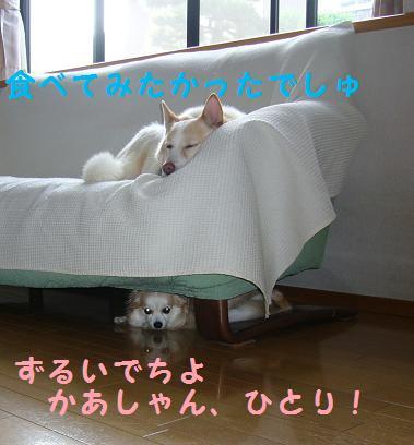 b0138430_20585196.jpg