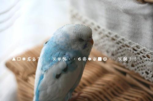 b0143835_1634294.jpg