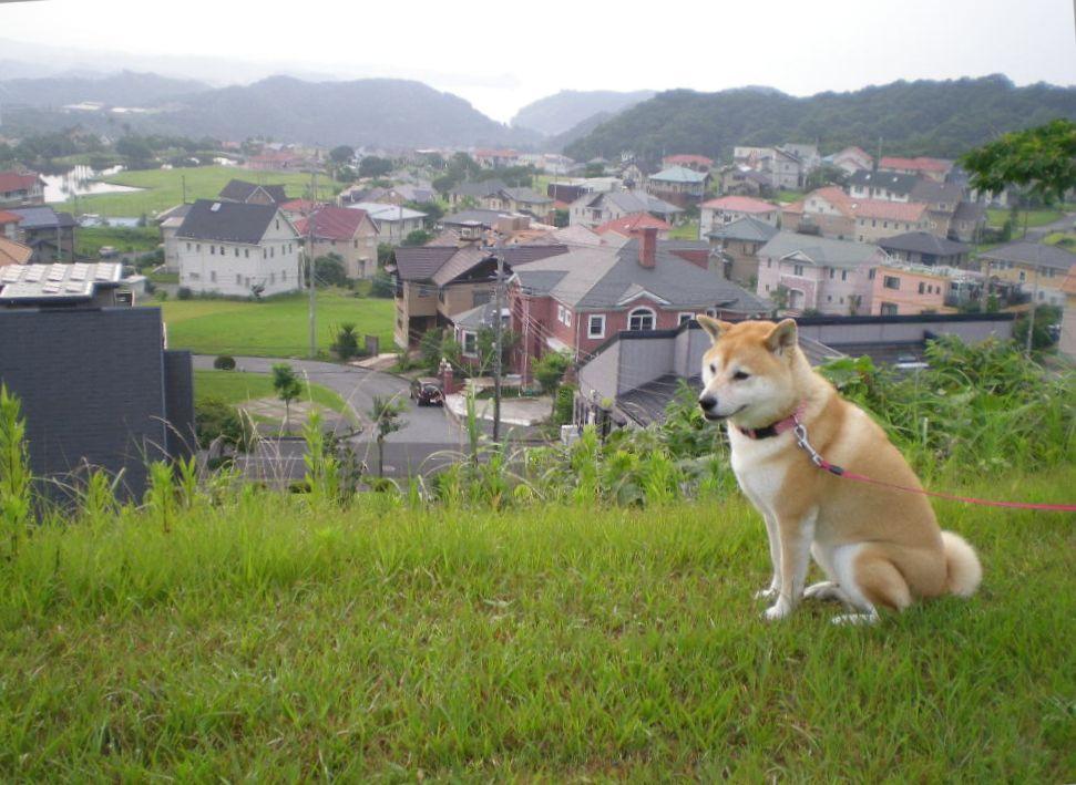 2008年7月15日(火)愛ちゃんのランチ!_f0060461_1551968.jpg