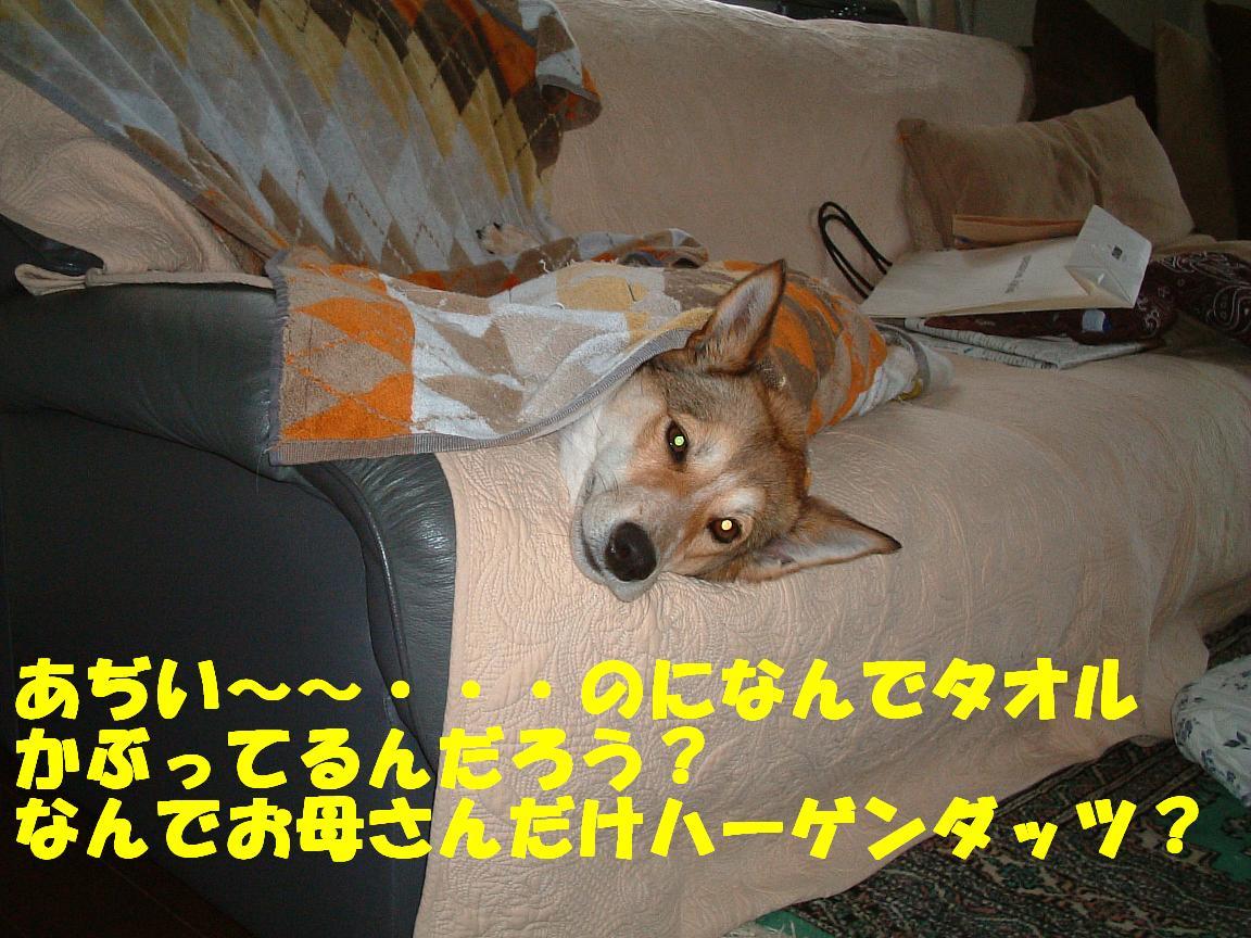b0069163_15184442.jpg