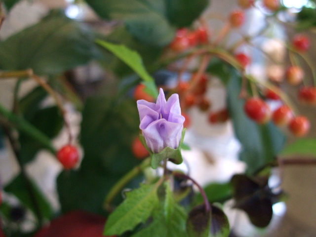オークリーフ花の教室(阿部さんの作品)_f0049672_1450423.jpg