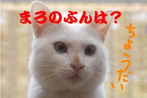 d0150434_17232090.jpg