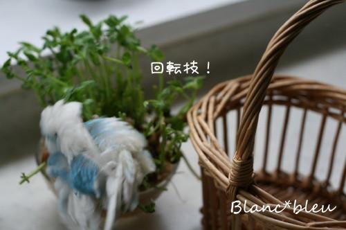 b0143835_16355095.jpg