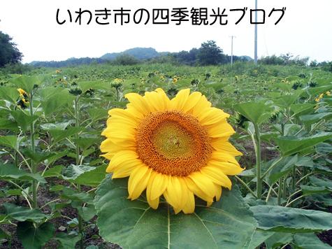 f0105342_15491790.jpg