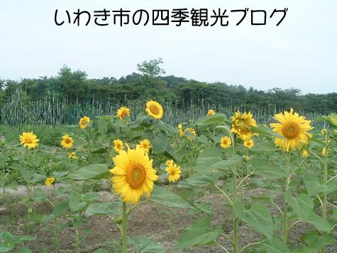 f0105342_1550893.jpg