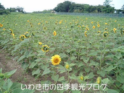 f0105342_15515642.jpg