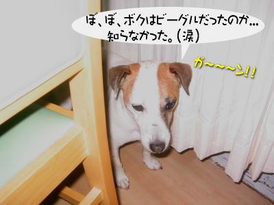 b0105157_19305671.jpg