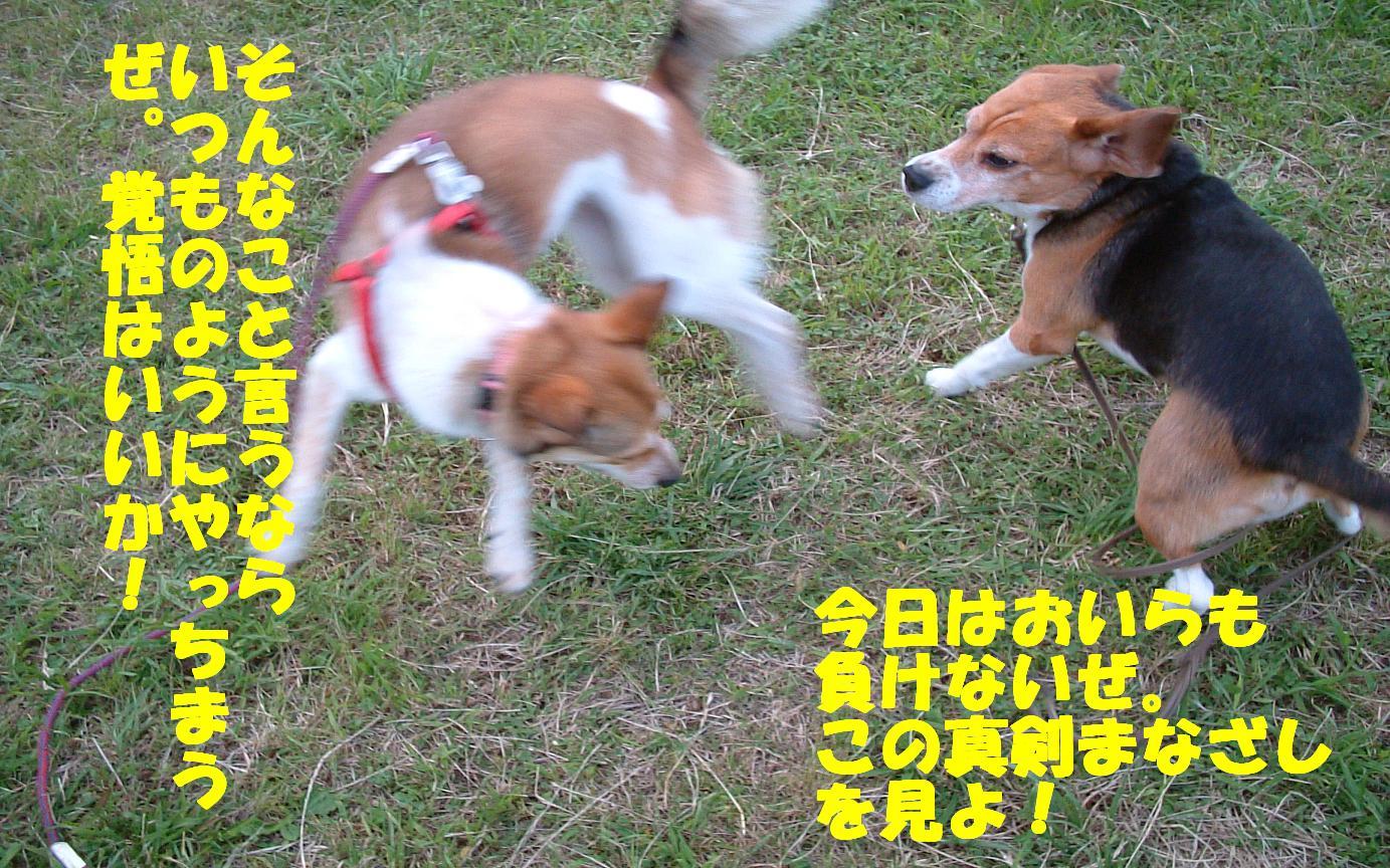 b0069163_17335123.jpg