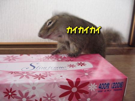 a0015164_12102425.jpg