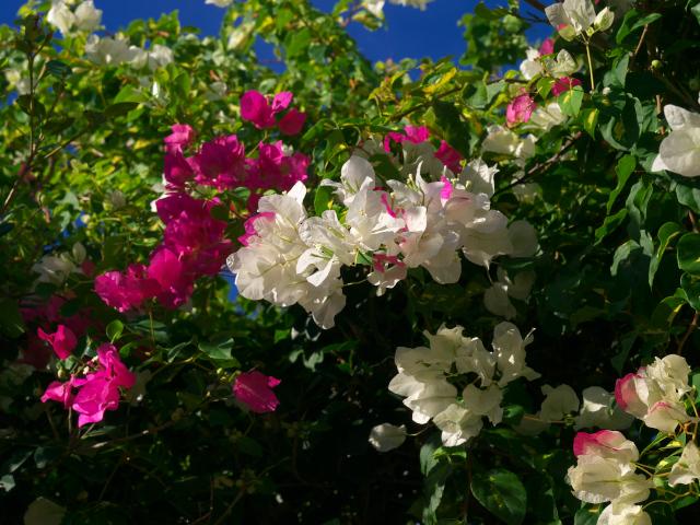 沖縄の風景 南の島の花をどうぞ!_f0024992_0493747.jpg