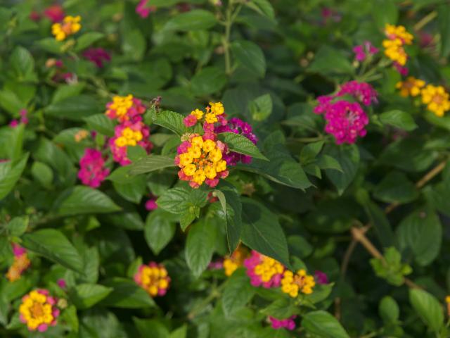 沖縄の風景 南の島の花をどうぞ!_f0024992_97185.jpg
