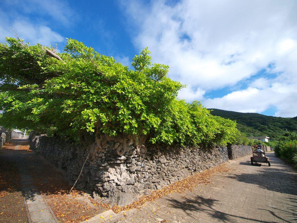 7/15-16 風の与路島〜サンゴの石垣_a0010095_17404996.jpg