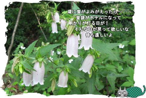 f0137096_14523587.jpg