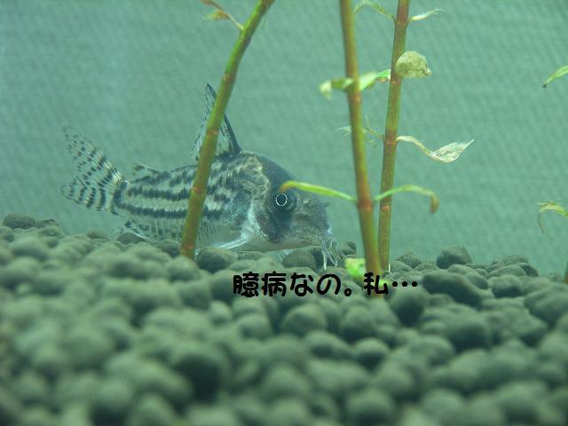 b0137599_1602683.jpg