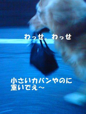 b0127531_20143315.jpg