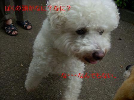 b0158035_11195124.jpg