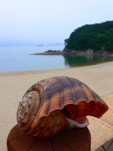三重県のグアムへ和具の浜!「まるます」のおつくり盛り合わせ丼 (三重県長島町)_d0108737_22224462.jpg