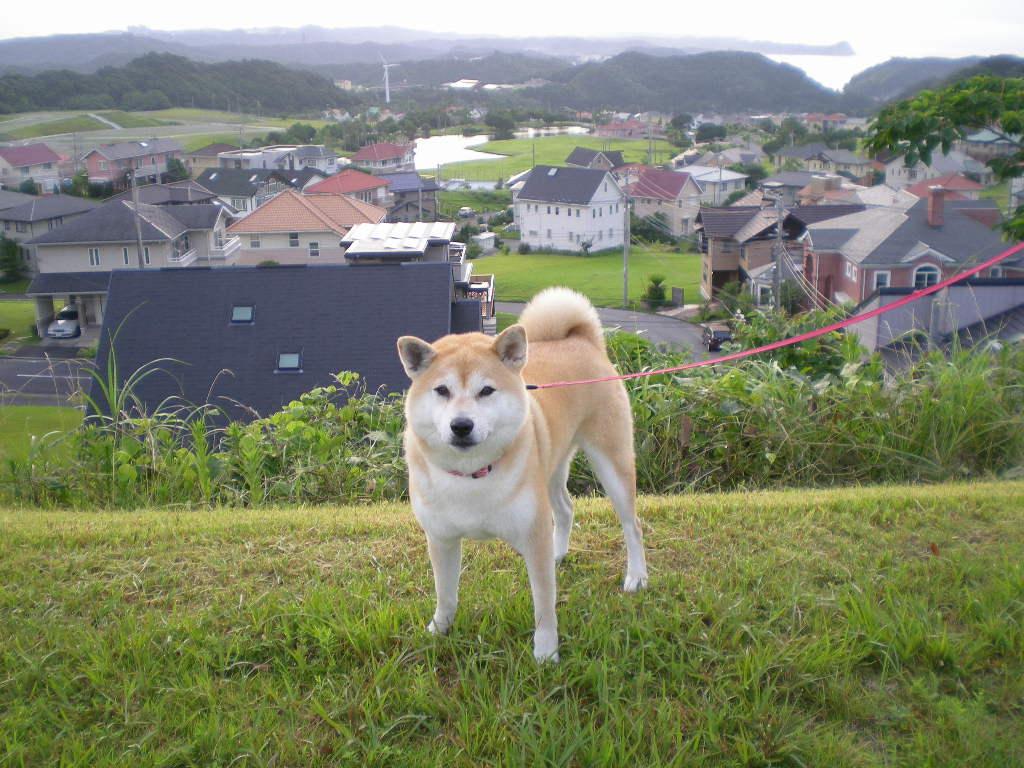 2008年7月17日(木)愛ちゃんと夏本番!_f0060461_14334062.jpg