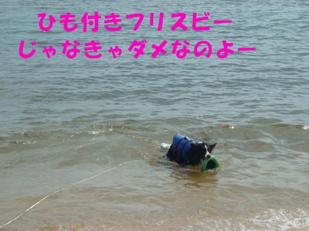 c0120585_214264.jpg