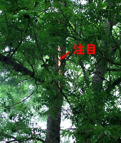 f0068385_6462628.jpg