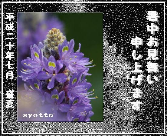 f0164592_940020.jpg