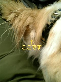 f0148927_18564214.jpg