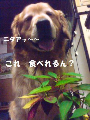 b0127531_20571351.jpg