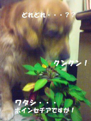 b0127531_2058450.jpg