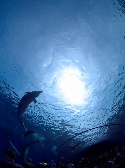 Dolphin Fantasy_f0018464_18501171.jpg