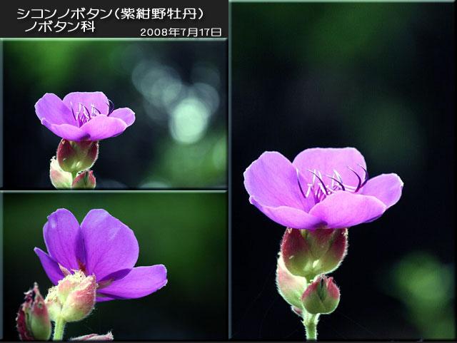 f0104569_1231473.jpg