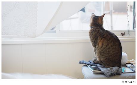 ボキ,働き猫なうえに賢い。