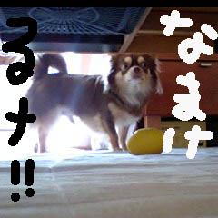 c0036617_19195180.jpg