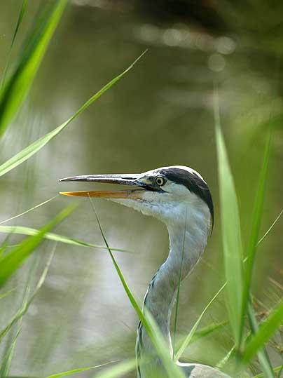 池に集まる動物_d0149245_0125410.jpg