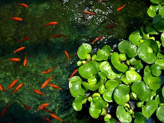 池に集まる動物_d0149245_0151479.jpg