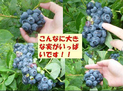 d0089861_16154339.jpg