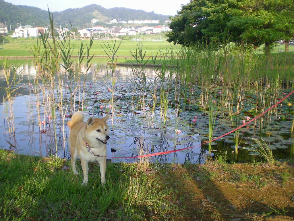 2008年7月19日(土)愛ちゃん伸び~る!_f0060461_10553165.jpg
