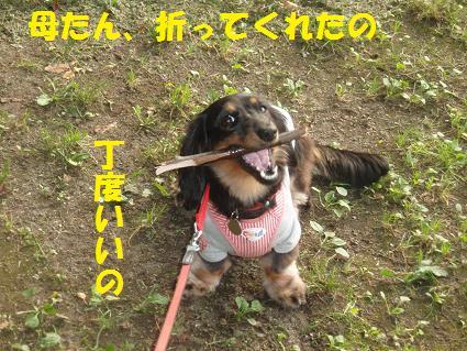 c0151866_2217884.jpg