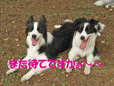 f0132070_0243349.jpg