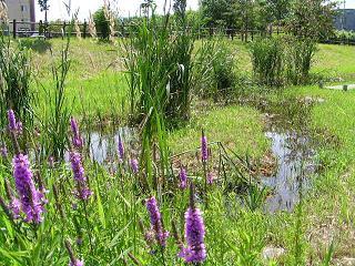 夏のサクシュコトニ川緑地_f0078286_10351434.jpg