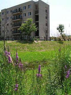 夏のサクシュコトニ川緑地_f0078286_1036568.jpg