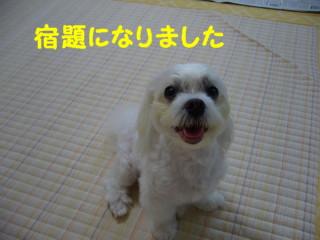 f0145192_1615682.jpg