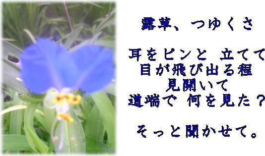 d0070316_1428269.jpg