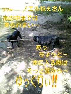 f0148927_16164599.jpg