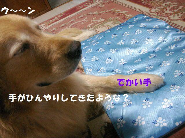 b0127531_14573951.jpg